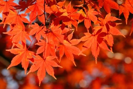 紅葉 デジイチ